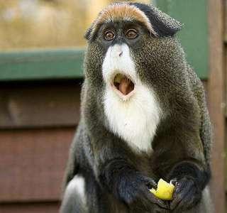 動物でオカマバーを開店するトピ