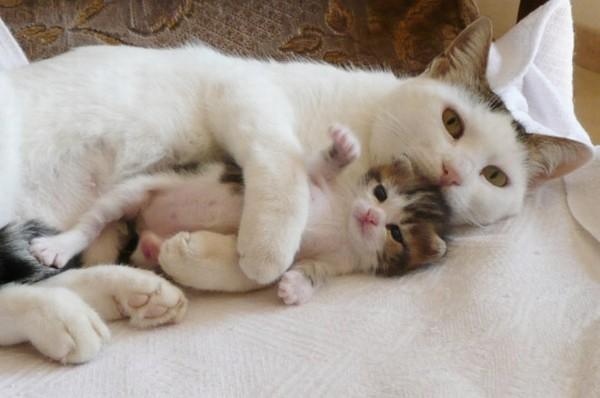 一番お気に入りの猫の画像を貼るトピ