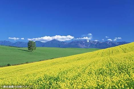 好きな土地に住めるならどこに住みますか?
