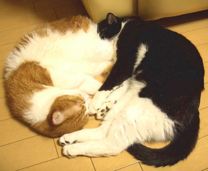ペットに寝る場所を占領される方