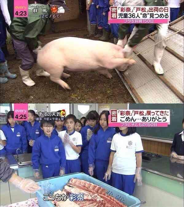 もしも自分で殺さないといけないなら、豚や牛を殺してまで肉を食べますか?