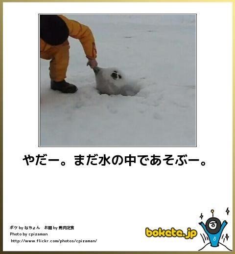 動物限定のボケて画像