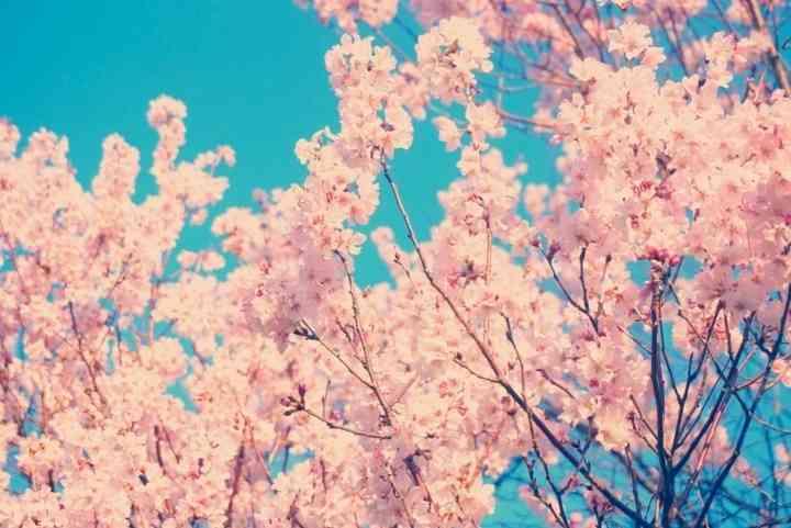 春が憂鬱な人