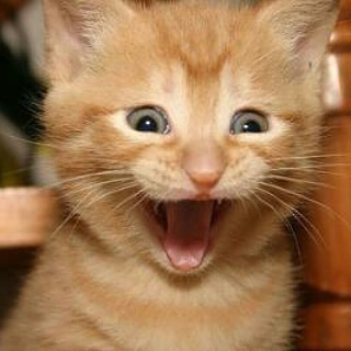 ONE OK ROCKのRyotaが結婚したことを発表  今月に入籍