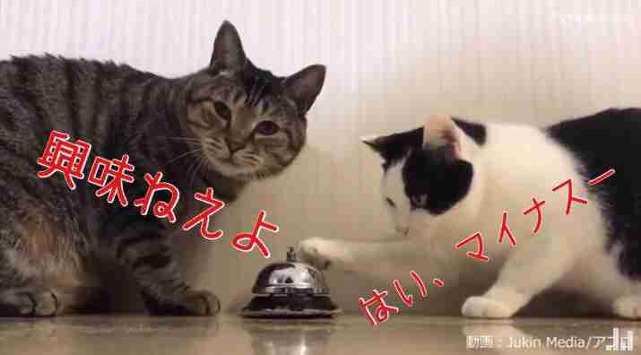 水嶋ヒロ、妻・絢香から「大好きなやつ」プレゼント「嬉しい~」