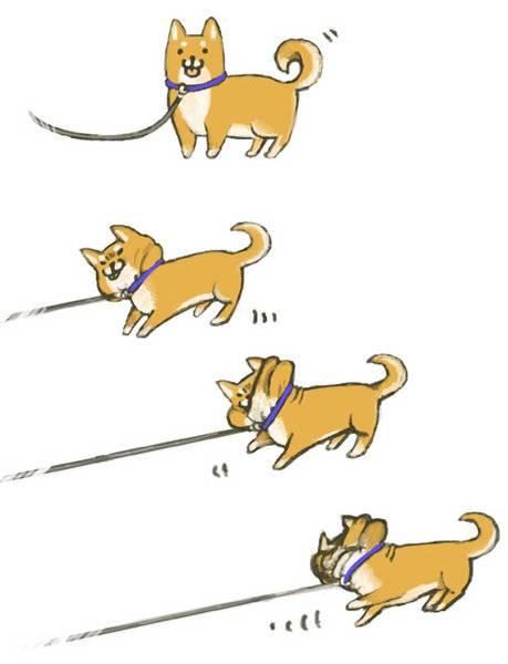 犬のいる生活