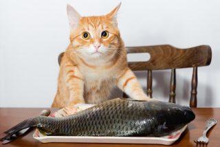 魚どれ位の頻度で食べてますか?