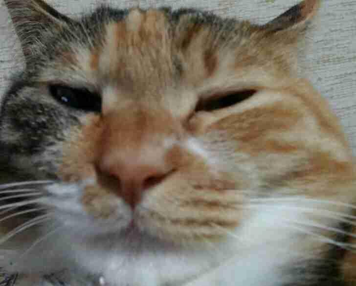 ペットの写真を貼っていくトピ