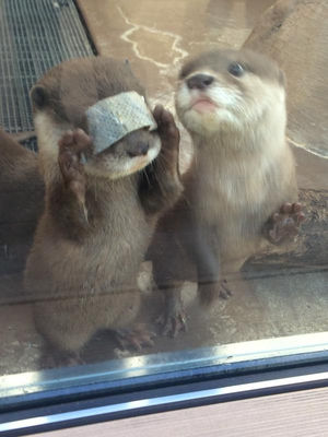 動物園好きな人集まれ~!zoo!