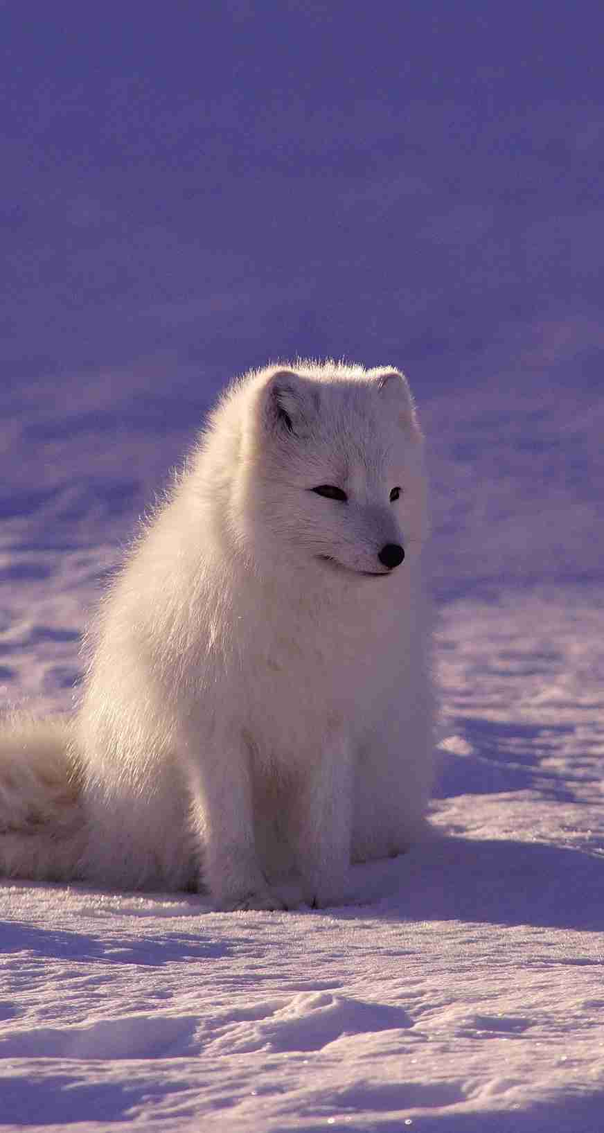 北海道の動物を愛でる会