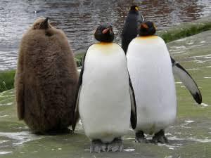 【画像】ペンギンが集まるトピ