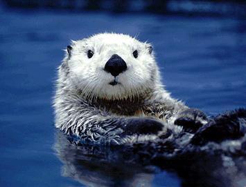 繁殖に向け「リーリー」と「シンシン」の公開中止 上野動物園、発情の兆候