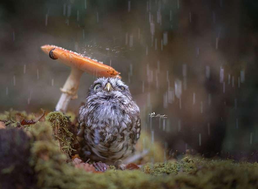 フクロウが好きな人!!