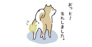 柴犬について語ろう。
