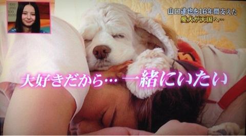 【ジャニーズ】動物とのツーショット画像を貼るトピ