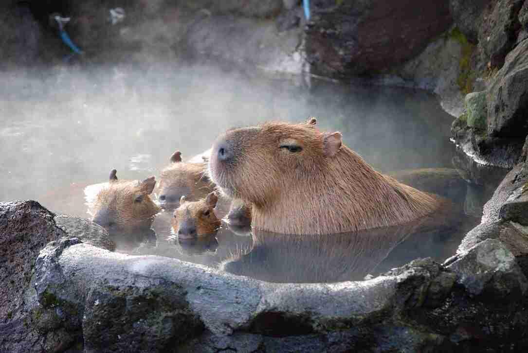 温泉が好きじゃない人