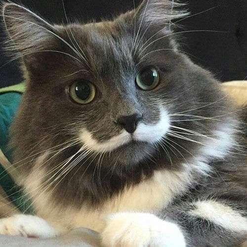 「吾輩は猫である」まっすぐ椅子に座るやたらと人間っぽい猫が人気