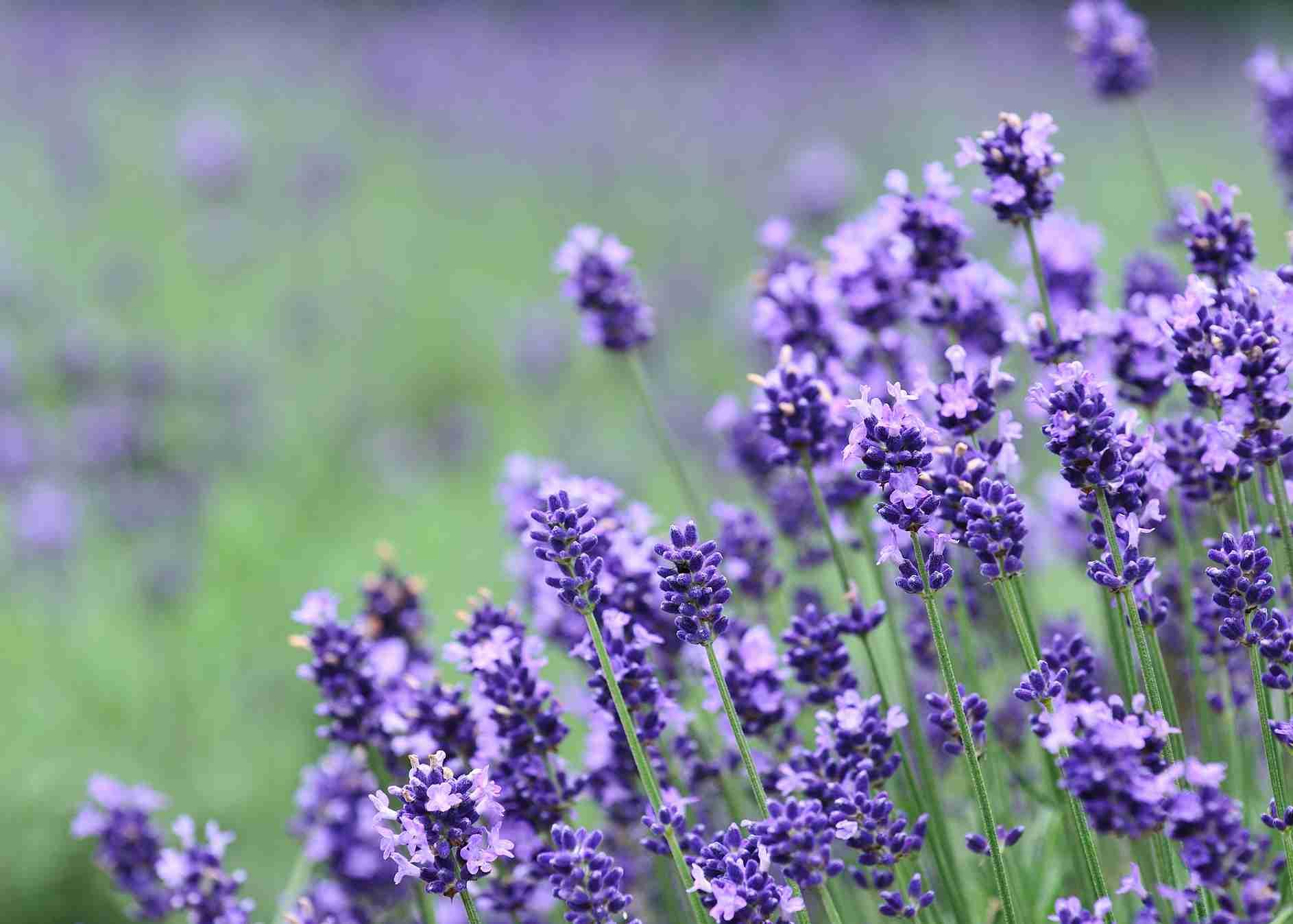 【おすすめ】癒される香り・モノ