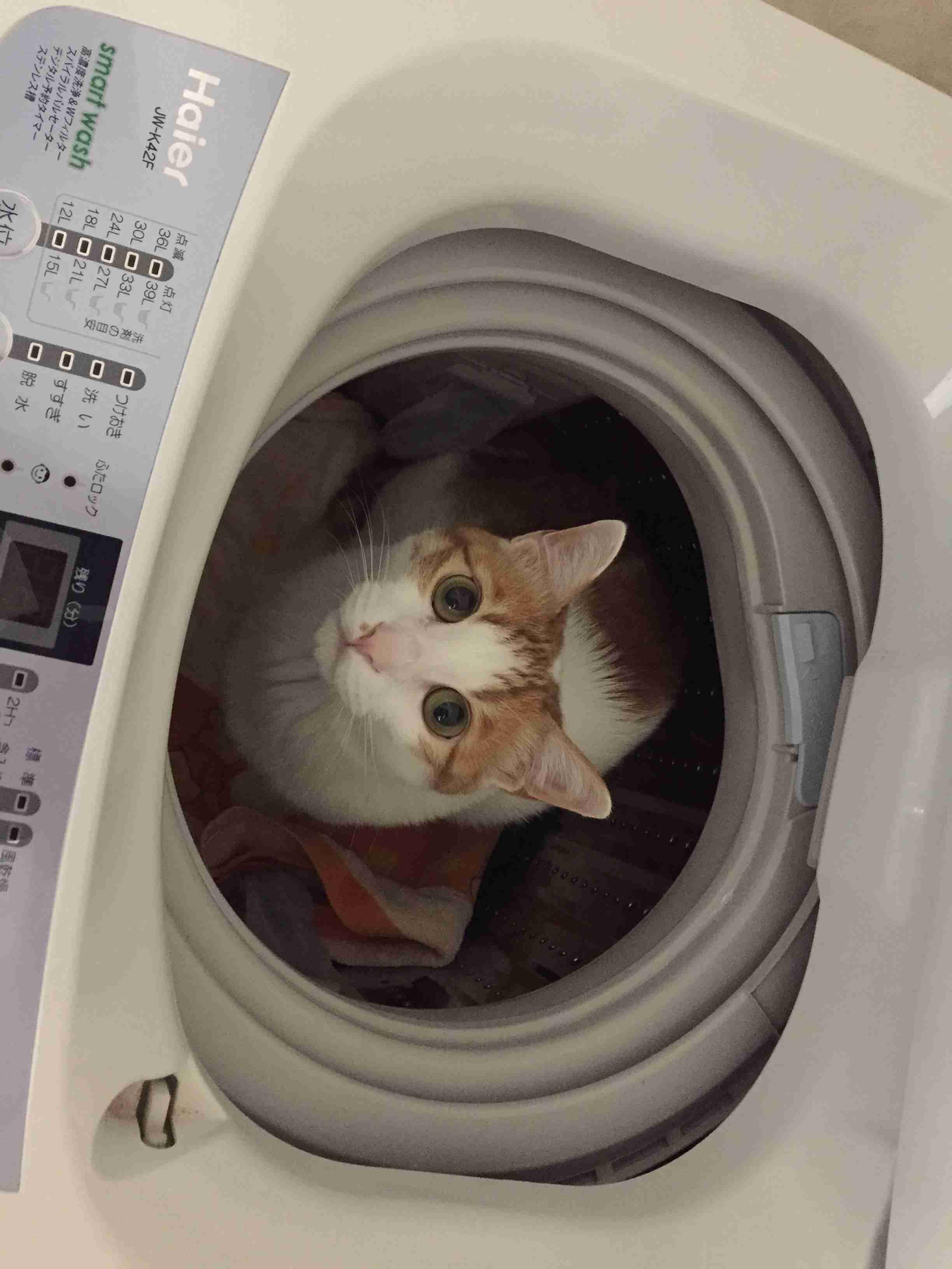 【猫】夜の運動会について、真剣に語りたい