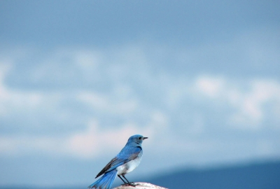 幸せの青い鳥集めましょう