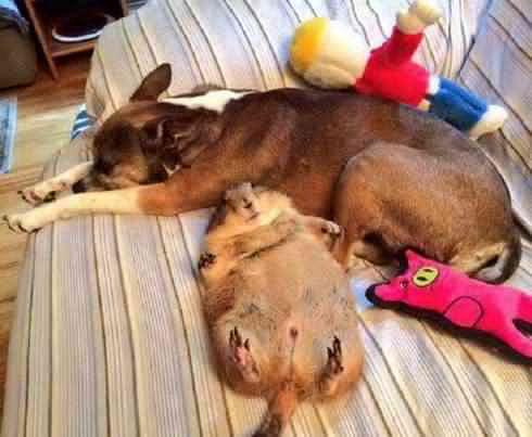 助かった……火災から救出されたプレーリードッグが安心しきっている