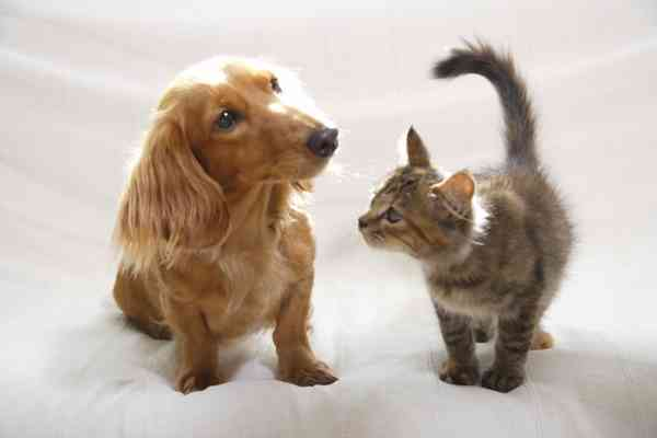 動物が物扱いされている日本の法律をどう思いますか?