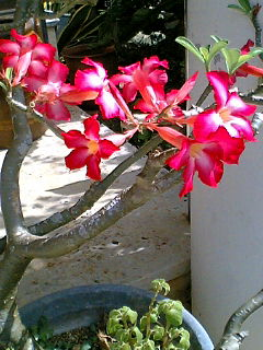 【写真を】花の名前を教えてもらうトピ【貼って】