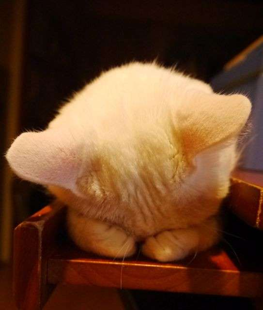 ごめん寝画像を貼るトピ!