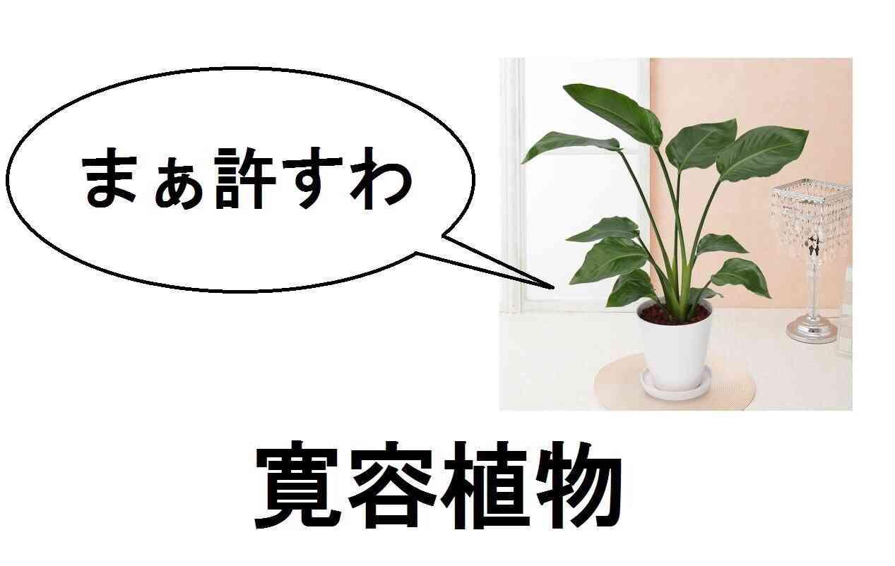 観葉植物の育て方について