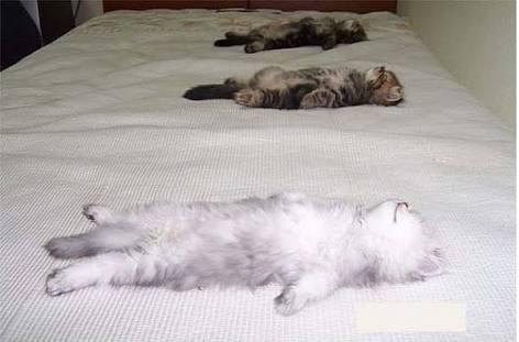 動物の寝顔見せて下さい