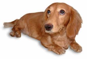 生涯独身、犬は飼えない?