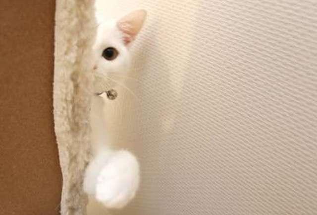 ガルちゃん猫カフェ13号店開店しました♪(初めての方も大歓迎!)