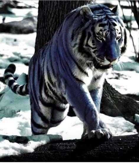 カッコいい動物の画像 ください!