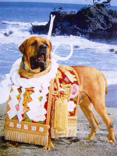 「闘犬」についてどう思いますか?