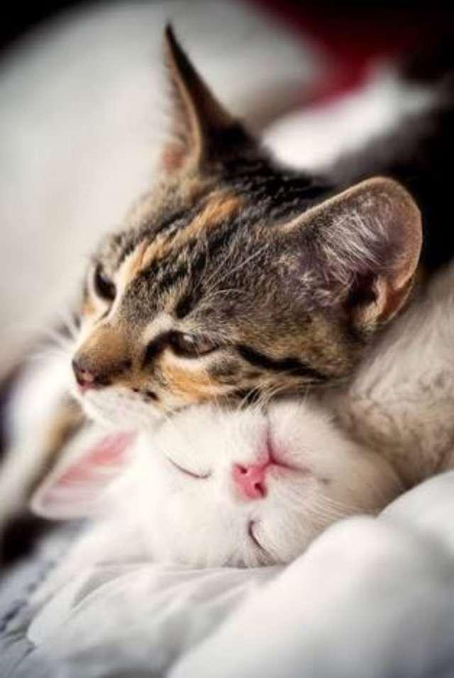 天使な猫ちゃんに癒される ヒーターを消したら急須に移動した子猫がたまらないかわいさ