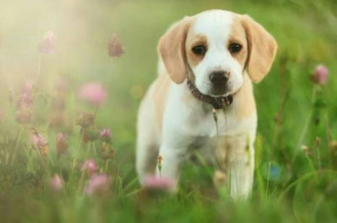 犬の糞尿対策