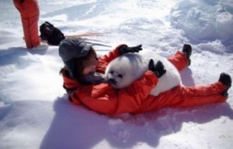 海外でも話題!ぬいぐるみを抱く姿が可愛すぎる北海道紋別のアザラシ
