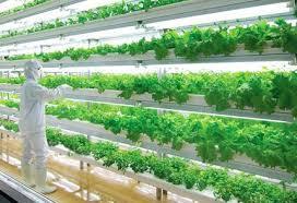 レタスを家庭で自給自足、3万円のIoT水耕栽培キット「やさい物語」が発売決定