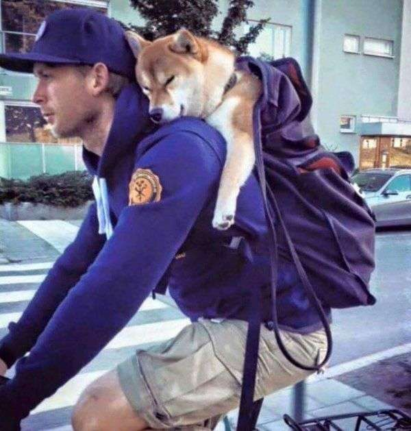 ペットと一緒に旅行したことがある方〜!