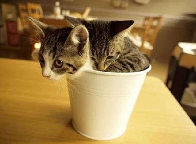 子猫の画像で癒されたい