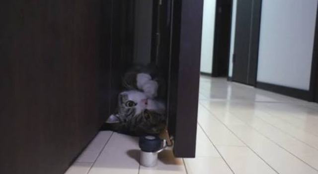 コーラこぼしてごめんにゃさい… 叱れなかった飼い主さんを物陰から気遣う猫ちゃんがかわいい!