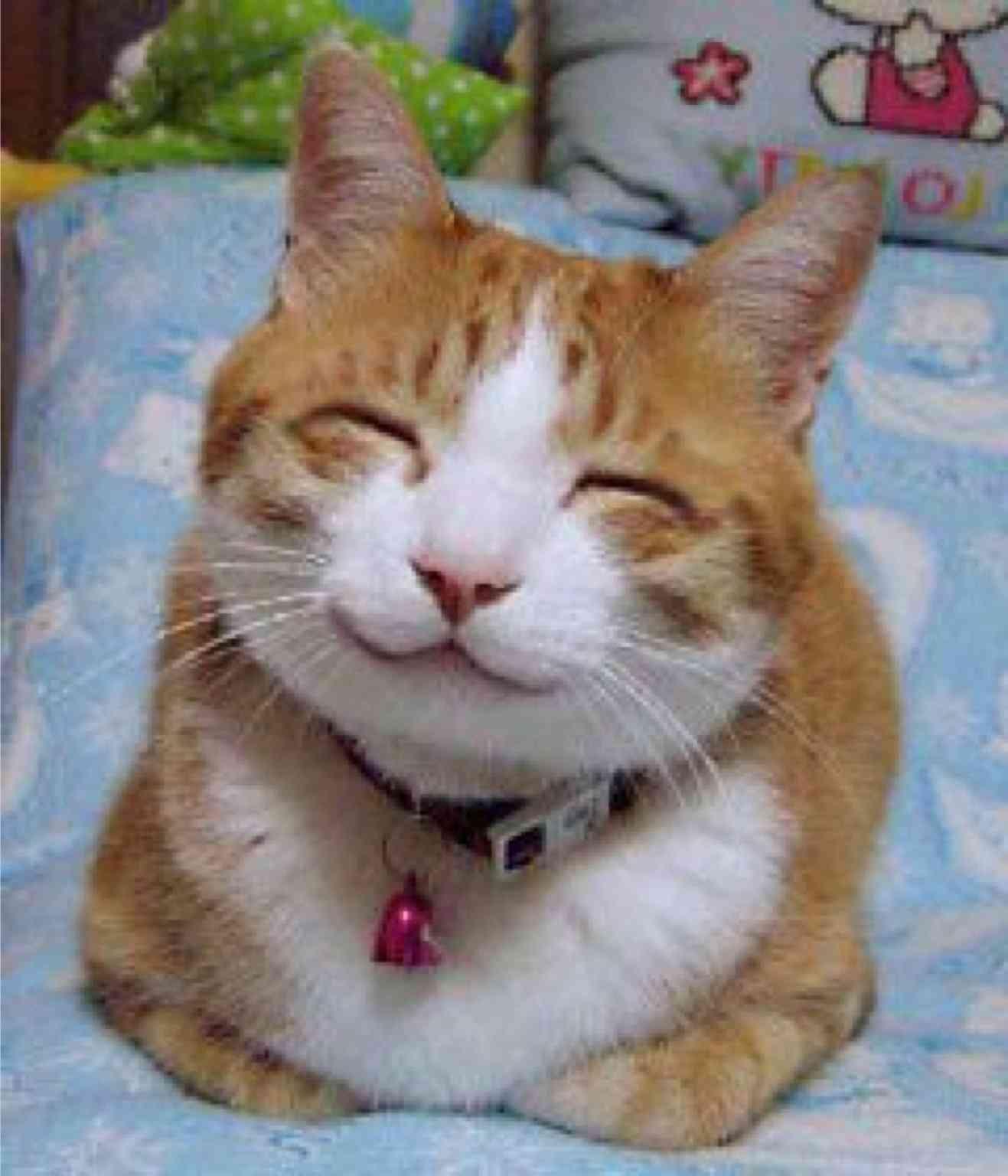 幸せそうな画像ください