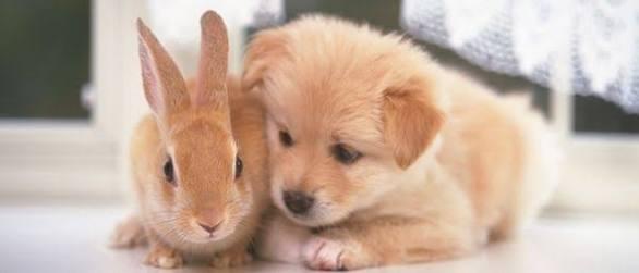 小動物カフェ♪︎open♪︎