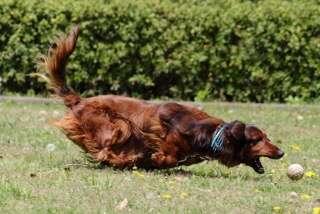 犬と猫、大きさ毛の長さどっちが好き?(大型or小型、長毛種or短毛種)