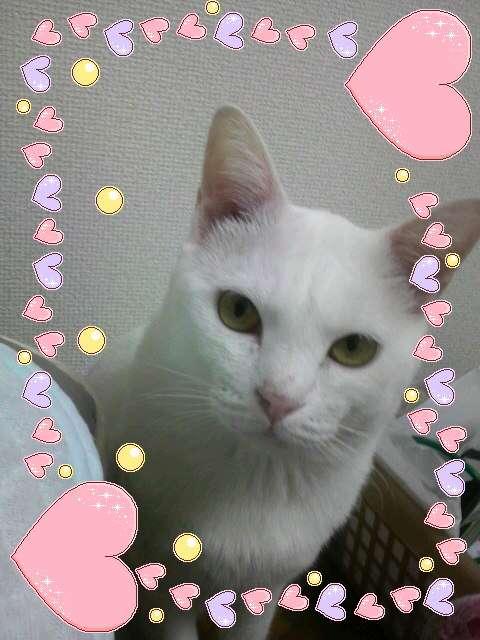 一番好きな猫キャラを教えてください