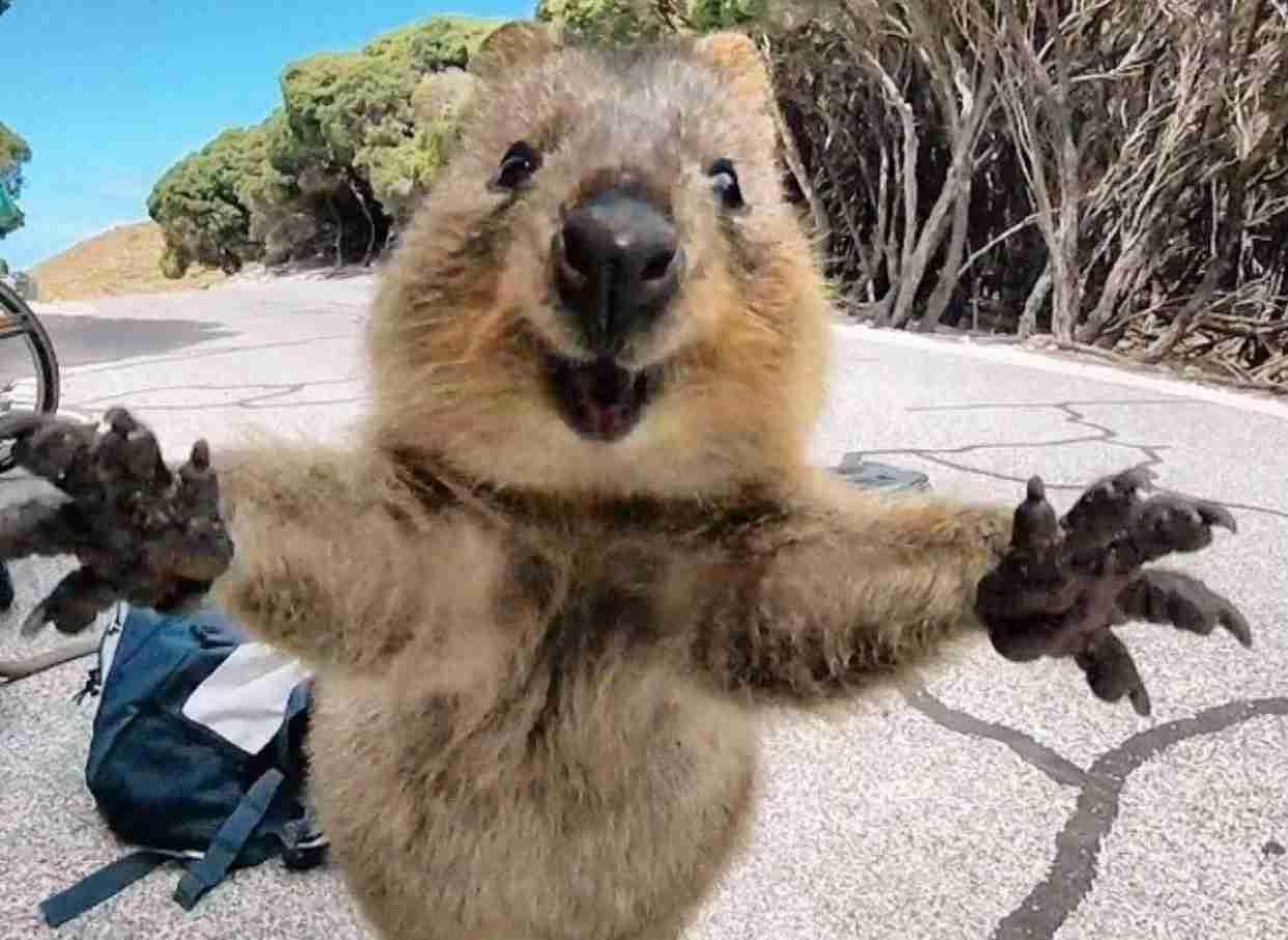 オーストラリア在住経験のある方!!