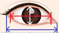 目、何センチですか?