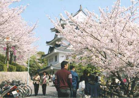 お勧めの桜の名所はどこですか?