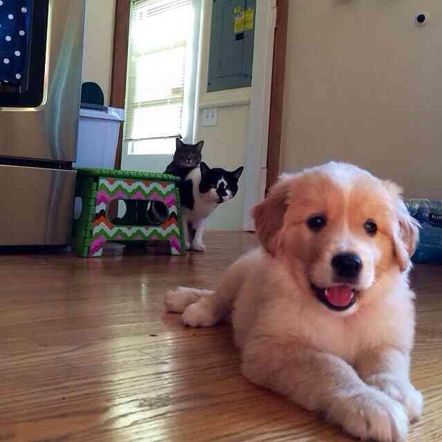 ニャンコ、新しく家族になったワンコに嫉妬 顔がわかりやすすぎる!