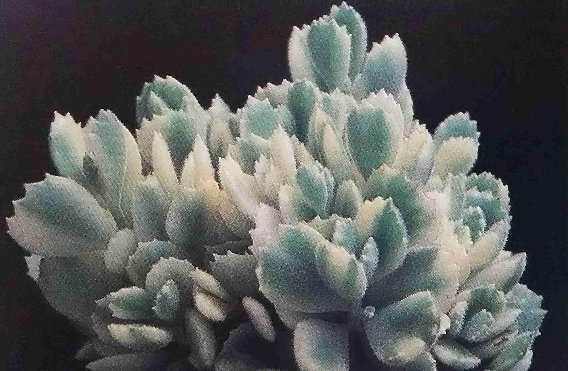 植物に名前を付けて育ててる人